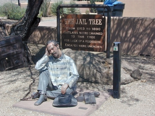"""The Jail Tree - From 1863 to 1890 outlaws were chained to this tree for lack of a hoosegow... escapes were unknown"""