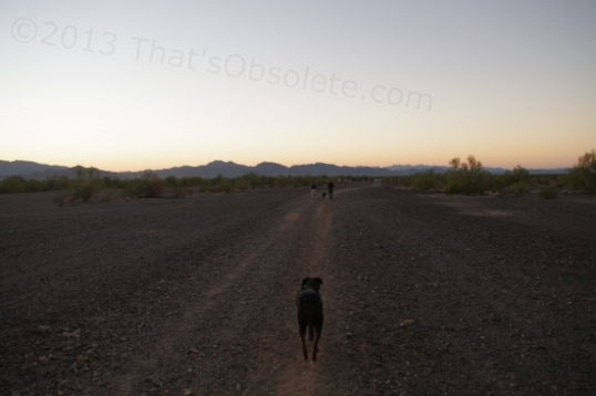 And this is one of the dogs, of course leading the way back to camp. They always want to do that.