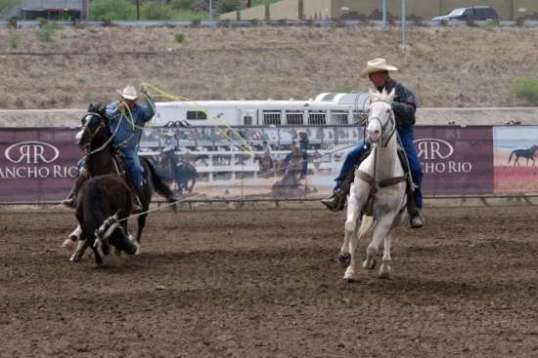 The lead roper needs to end the full run, but must not let the steer stop, either.