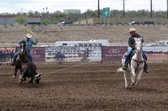 The steer spends his attention forward, while the second roper waits for the right moment to throw his rope.