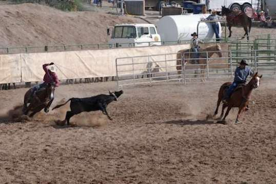 The steer is pulled left at a good clip.