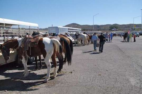 This shows most of the trailers, but let's just say there was a heap o' horsies.