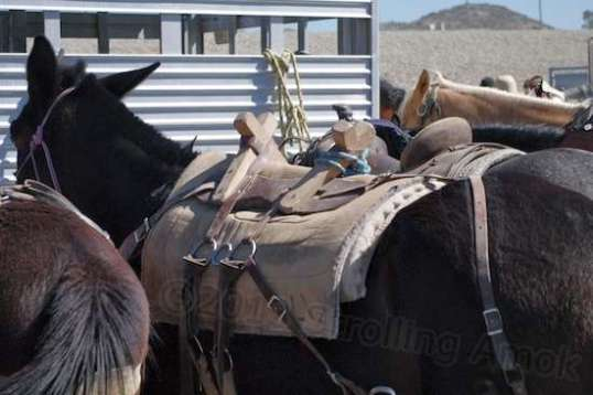 A few of the horses are used as pack animals, and this rig allows that.
