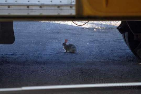 Bunny! Bunny! This was this morning in Walsenburg, Colorado at the truck stop, before I left.