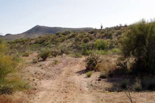 A typical section of the main trail, which was easy going, overall.