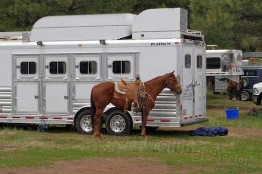 A good lookin' horse in front of one of the posh rigs, which had no correlation to finishing order.