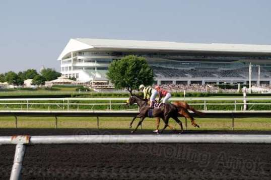 Taken from the far side of the track, these horses ran on the grass and then returned on the dirt at an easy trot.