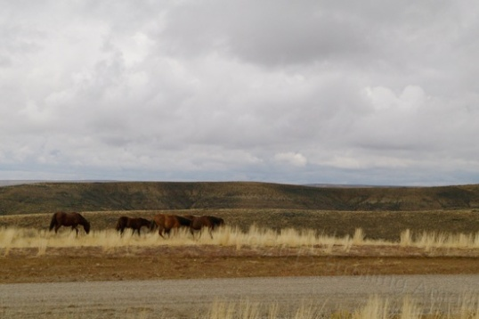 This is the first time I've seen horses on my visit, and I find it impressive to think that they are roaming free.