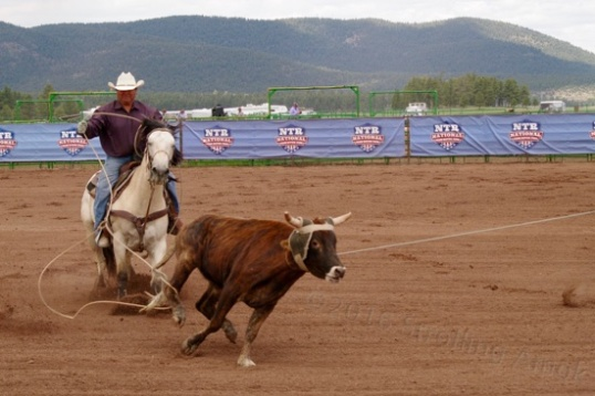 Time will be added for roping the steer's neck, but this heeler is about to succeed on his end.