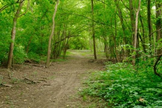 A walking path.