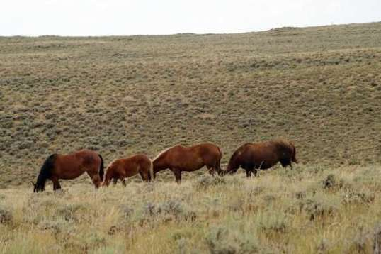 There are areas of Wyoming where seeing wild horses is almost commonplace.